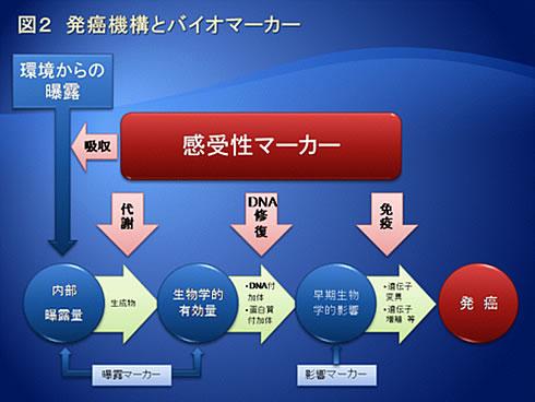 図2 発癌機構とバイオマーカー
